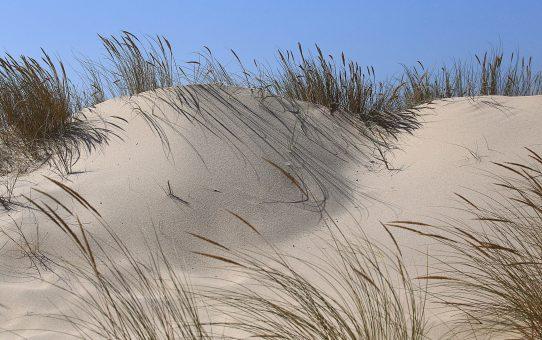 Costa de Lavos ; l'adieu aux dunes
